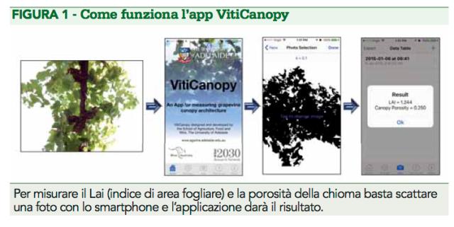 VitiCanopy